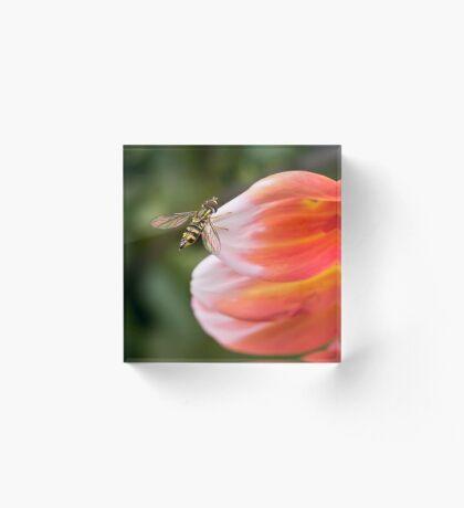 Schwebfliege auf Dahlienblatt Acrylblock