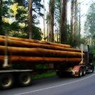 Another Load from deep within the forest by JenniferW