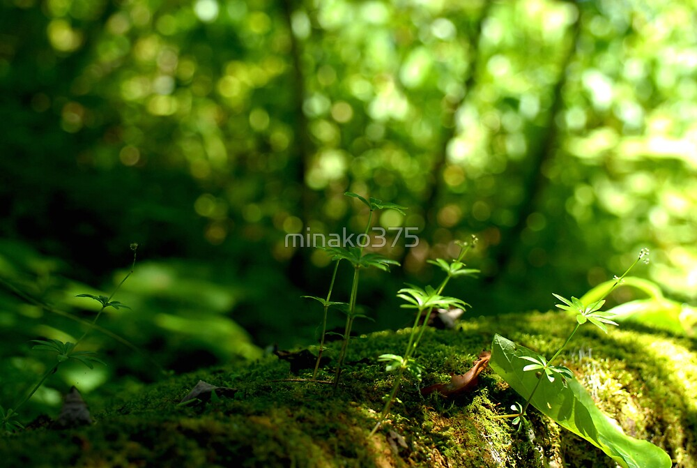 The friend of the forest by minako375