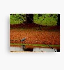 Heron Hunting Canvas Print
