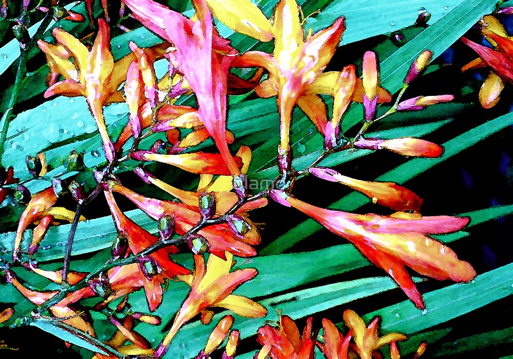 Flowers in the rain  by blamo