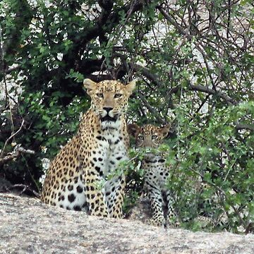 Leopard and Cub by fitch