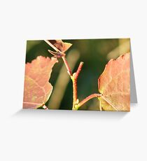 Red Leaves Plant Greeting Card