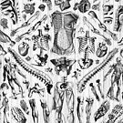 Fashion Anatomy Print (black on white) by adamcampen