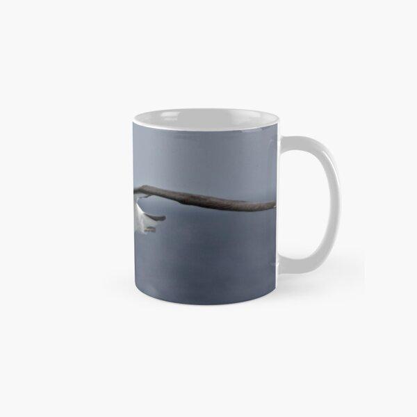 Black-browed Albatross ~ To Close Classic Mug