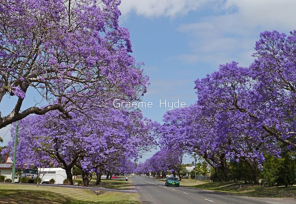 A Jacaranda Avenue by Graeme  Hyde