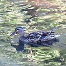 LuLucky DuckcLLuckLuckyLuck by Sandra Fortier