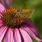 Mothra's Return by Jan Cartwright