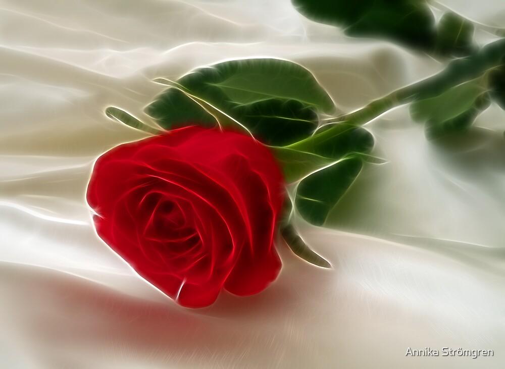 Romantic rose by Annika Strömgren