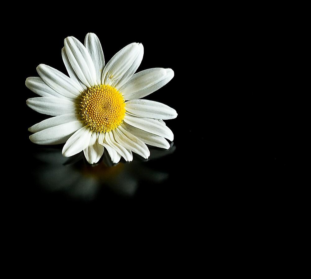 Big Daisy by mausue