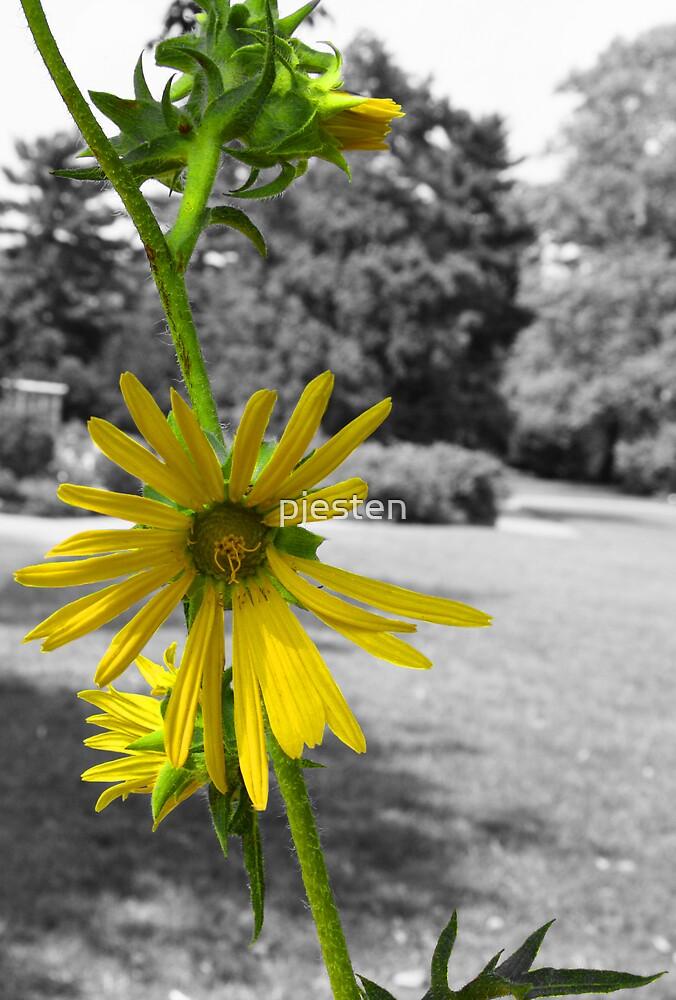 THE Yellow Flower by pjesten