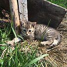 Gypsy The Barn Kitten Supervises by silverdragon