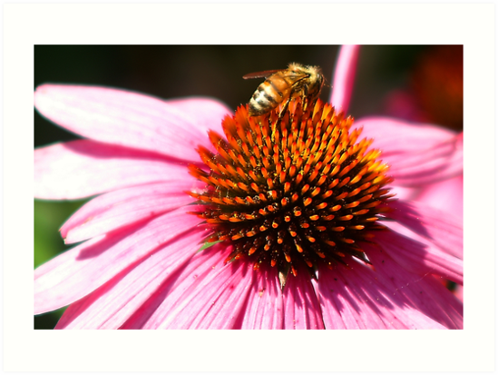 Honey by Mien