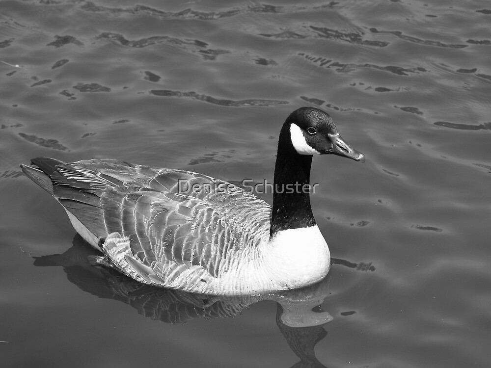 Duck- black & white by Denise Wolff