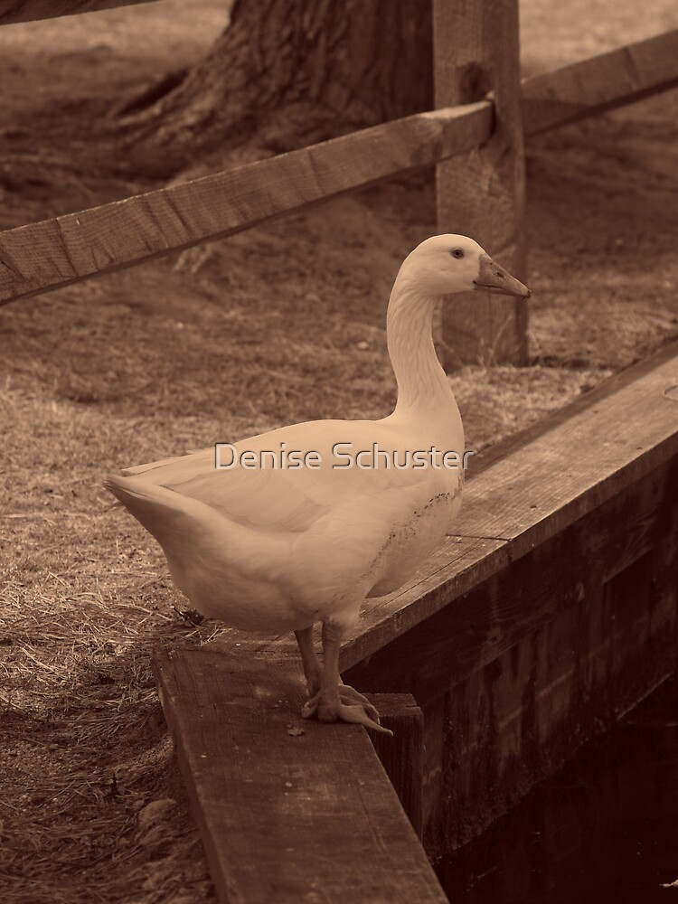 Duck - Sepia by Denise Wolff