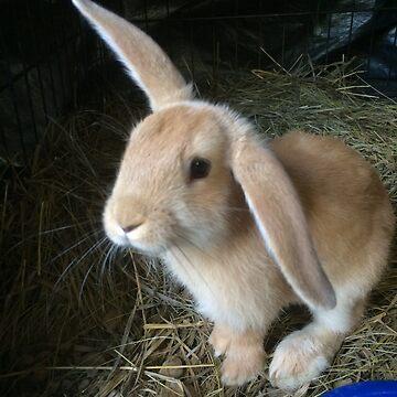 Little Tan Bunny With One Lop Ear by silverdragon