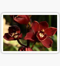 Dark Orchid 1 Sticker
