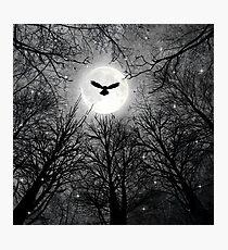 Wisdom Of The Night  Photographic Print
