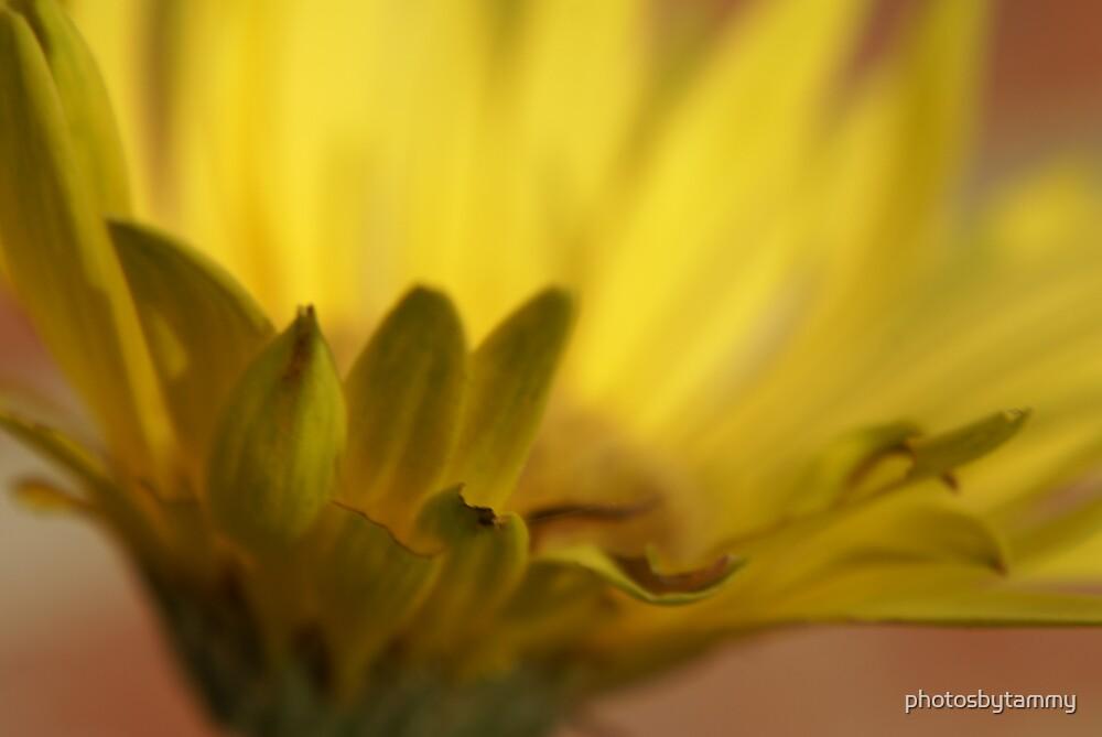 Macro flower 1 by photosbytammy