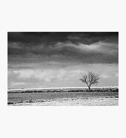 Standing alone Photographic Print