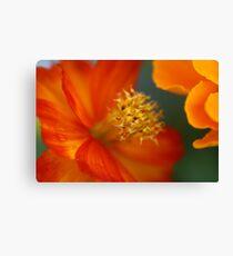 Macro flower 5 Canvas Print