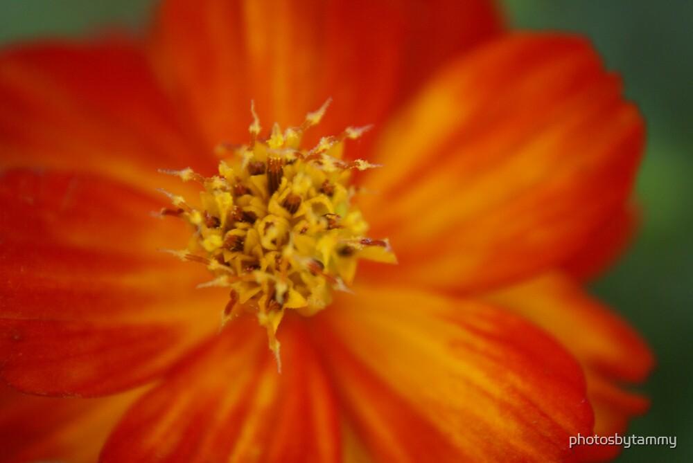 Macro Flower 6 by photosbytammy