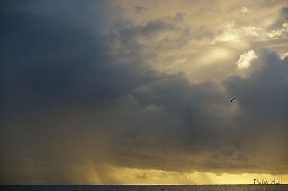Storm Birds by Peter Hall
