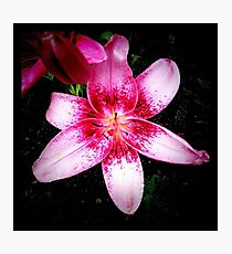 Purple lily Photographic Print