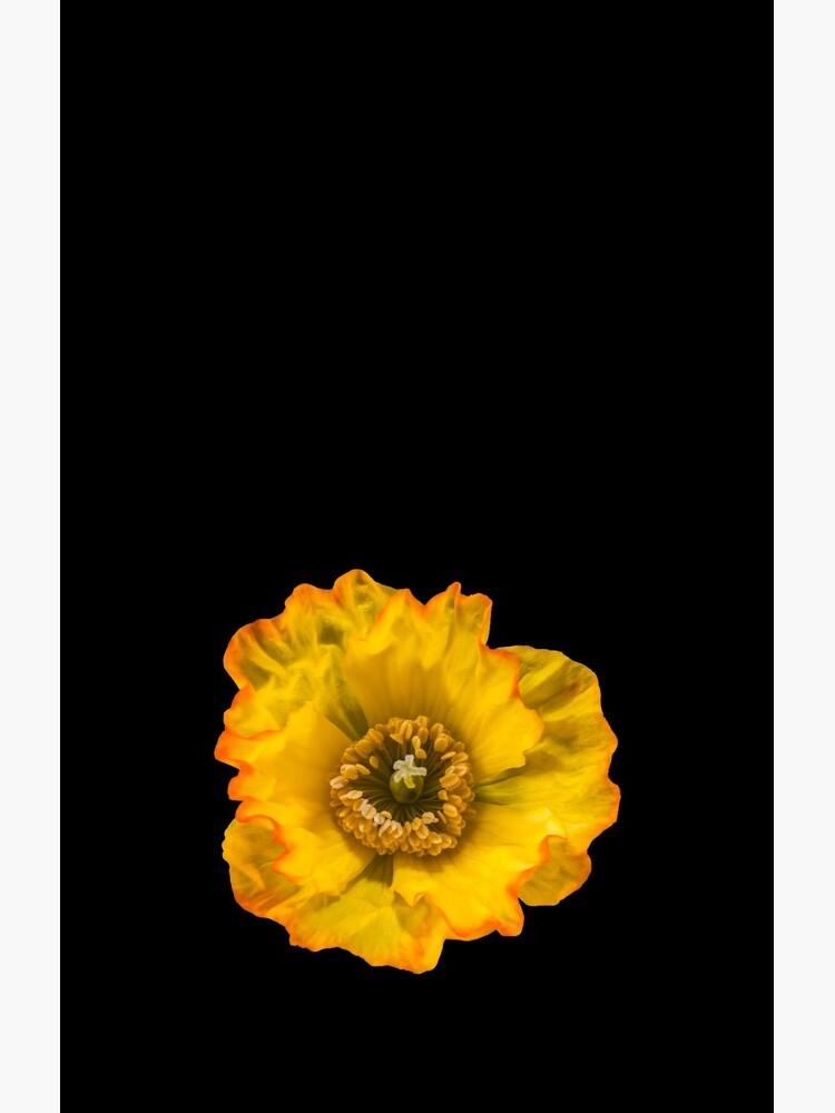 Yellow Poppy by sadler2121