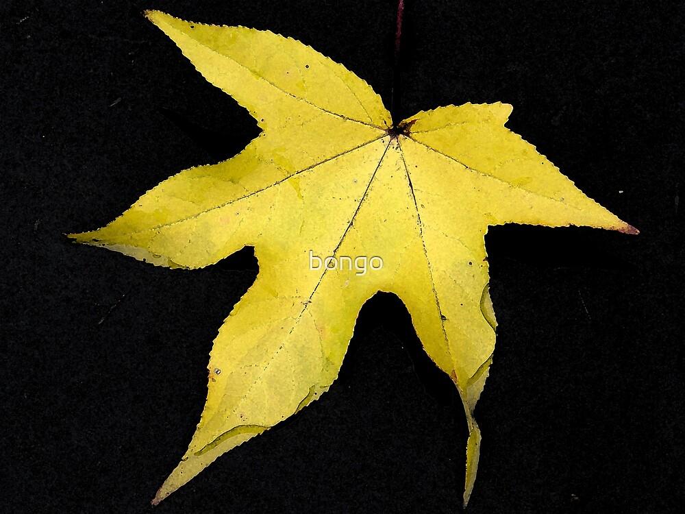 Yellow Leaf by bongo