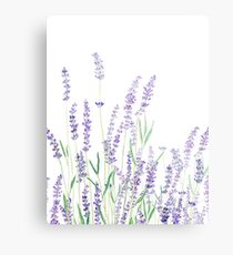 purple lavender  Metal Print