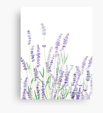 purple lavender  Canvas Print