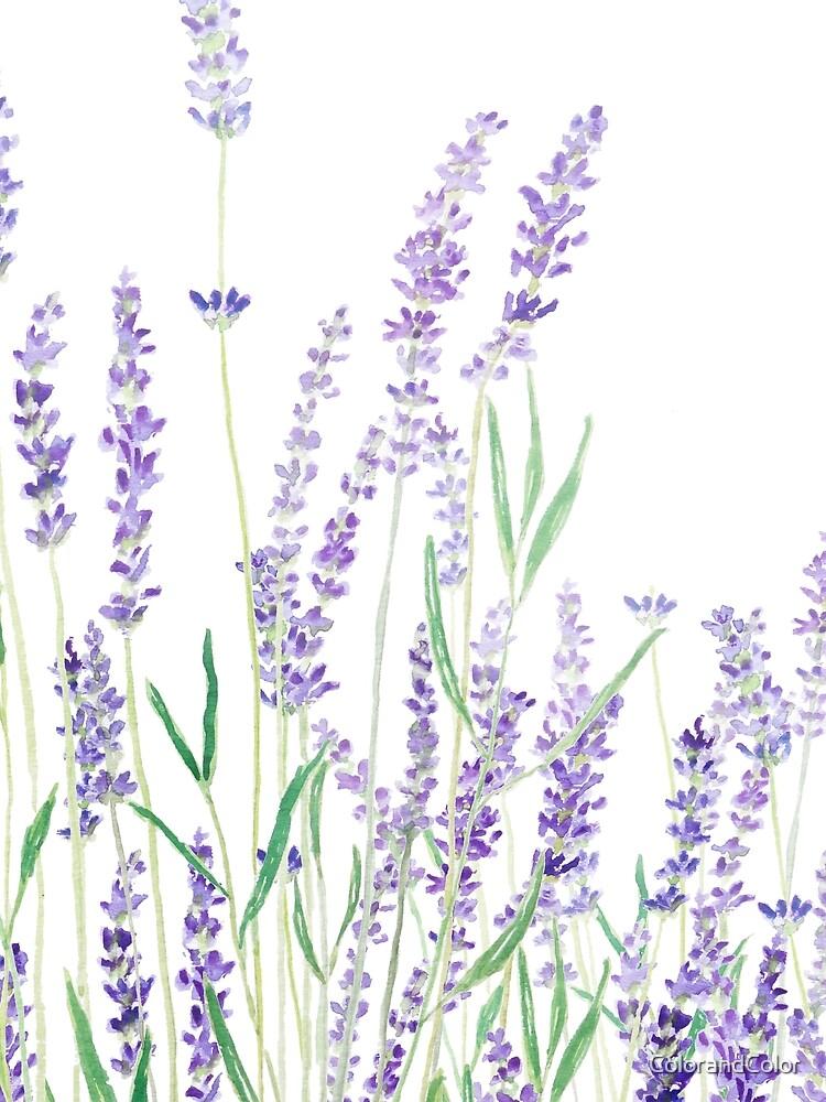 purple lavender  by ColorandColor