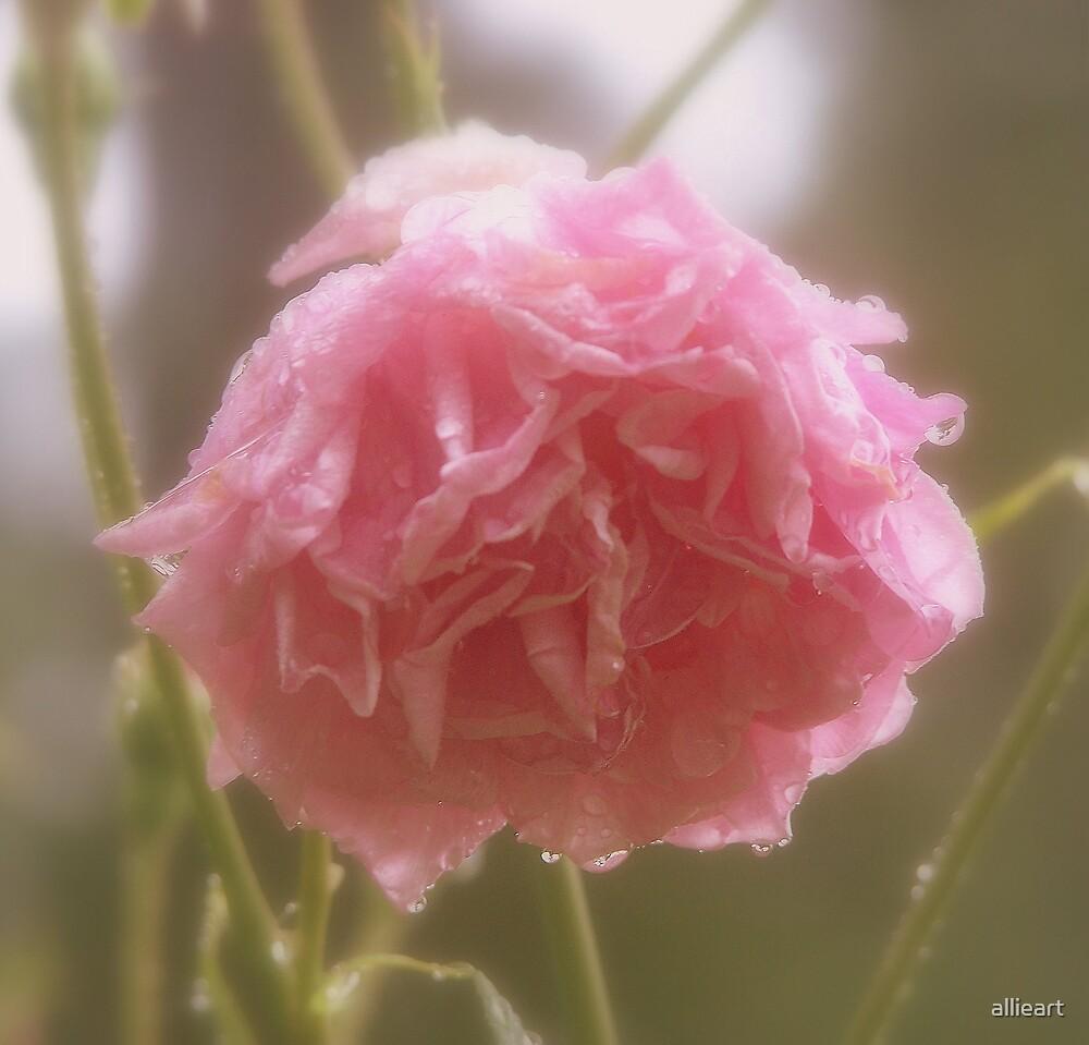raining rose by allieart