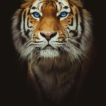 Tiger - Out Of The Black by Vitalia