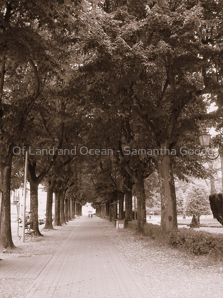 Corridor of arched trees by Of Land & Ocean - Samantha Goode