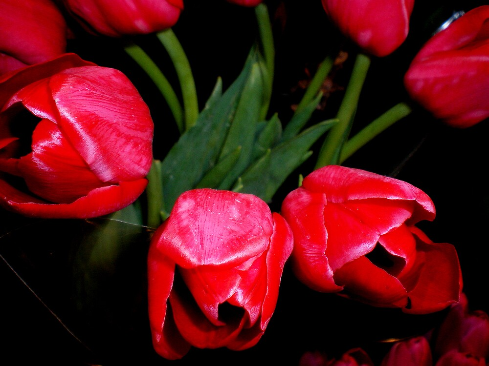 """Red, Red,Tulips . . ."" by lurline"