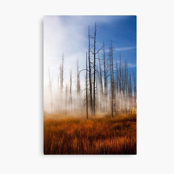 Tree Skeletons Misty Sunrise Yellowstone NP, USA. Canvas Print