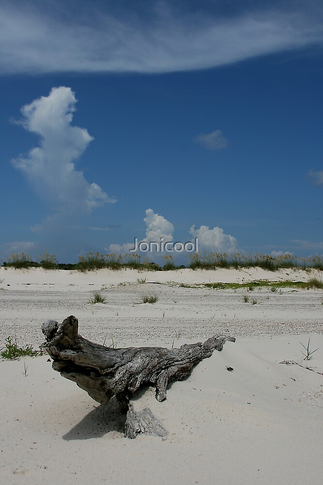 Driftwood and Sky by Jonicool