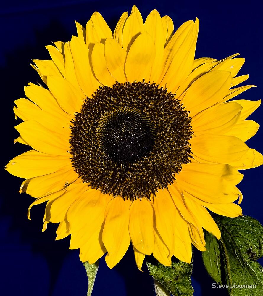 Yellow bright by Steve plowman