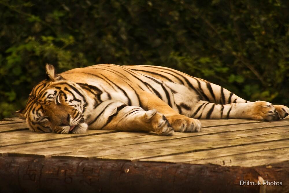 Knowsley Safari Park by Dfilmuk Photos