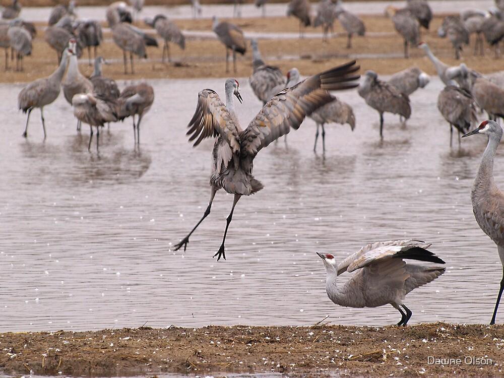 Dancing Cranes by Dawne Olson