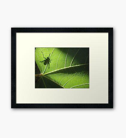 green gremlin Framed Print