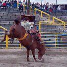 Bucking Bronco by Merilyn