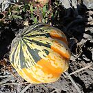 Multicolored Awesome Pumpkin! - Nature Photography by Barberelli by Barberelli