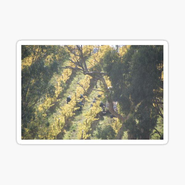 vertical vines - Magpie Springs - Adelaide Hills Wine Region - Fleurieu Peninsula - Winery Sticker