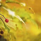 Red spot by Dominika Aniola