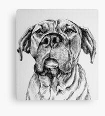 Mastiff Dog Canvas Print
