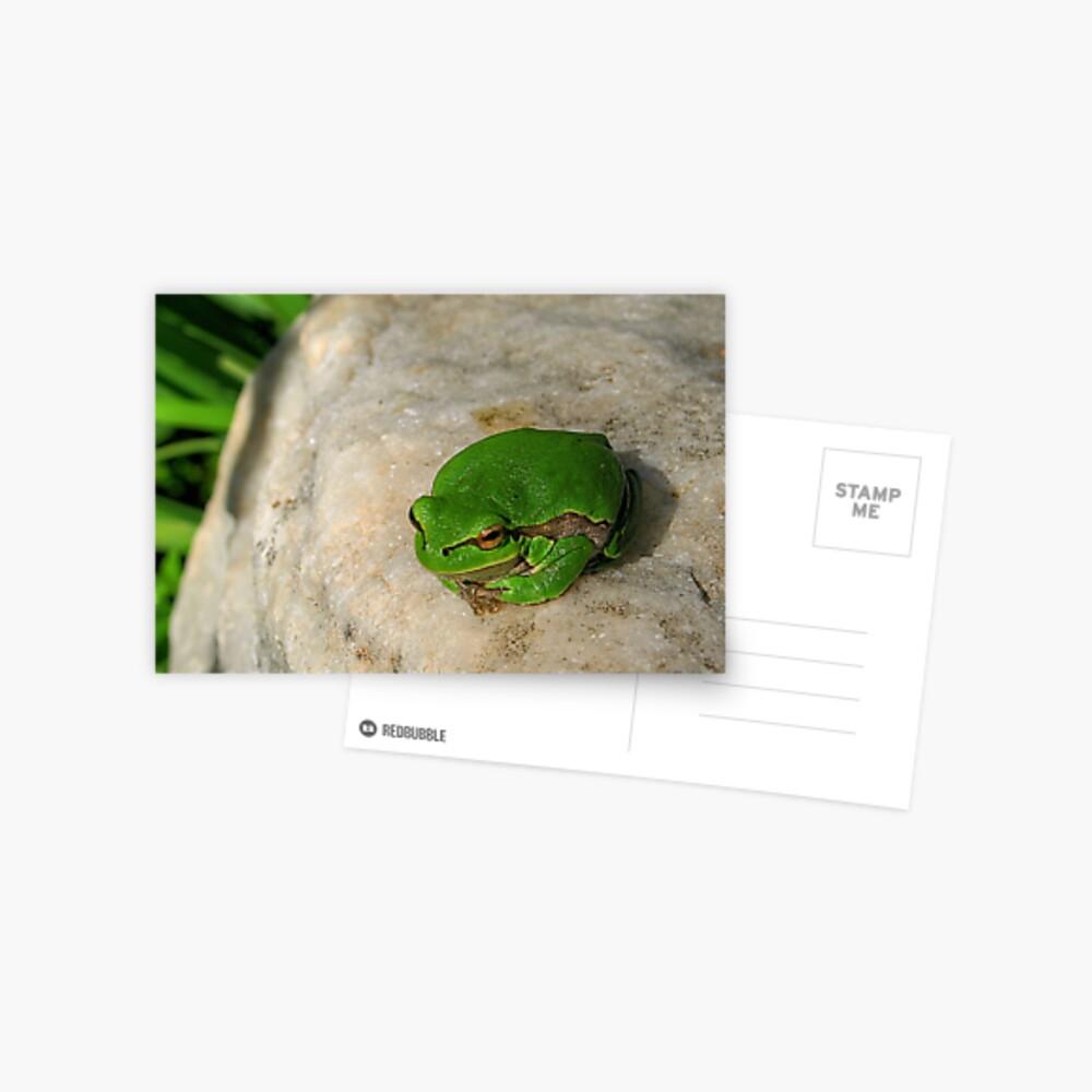 The European tree frog Postcard