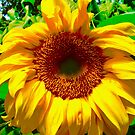 Summer Gold by Shulie1